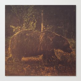 Brown bear III Canvas Print