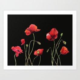Poppies at Midnight Art Print