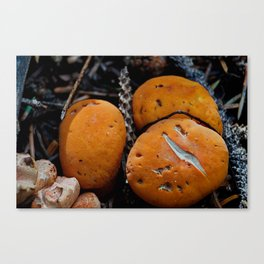 Tuffet Canvas Print