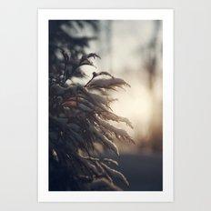 Winter Morn Art Print