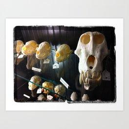 baboon bones Art Print