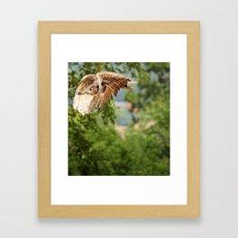 Silent flight Framed Art Print