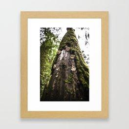 Mushroom Lynn Framed Art Print