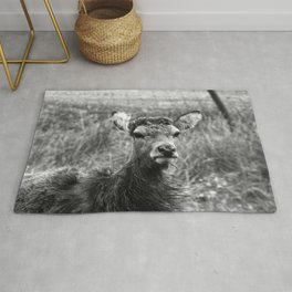 The young Highland Deer - Black and white - Loch Arkaig, Highlands of Scotland - 2019 Rug