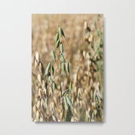 one green oat Metal Print