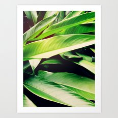 Leaves of Paradise Art Print