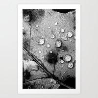leaf Art Prints featuring leaf by Bonnie Jakobsen-Martin