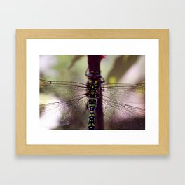 Wing Structure Framed Art Print