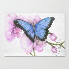 Blue Morpho Canvas Print