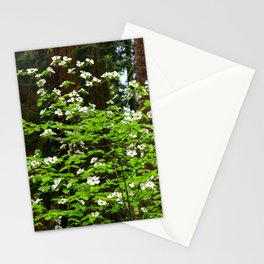 Flowering Dogwood, McKinley Grove, California Stationery Cards
