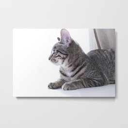 Cat Chilling Metal Print