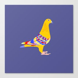 Colombian pigeon Canvas Print