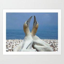 Northern Gannets in love Art Print