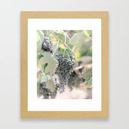 Grapes Wine Farm Crete, Greece   Travel Photography Print Light Colors Framed Art Print