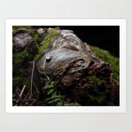 Huge knot on a piece of wood, covered in moss Art Print