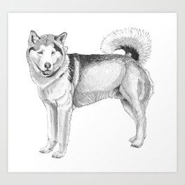 Alaskan malamute Art Print