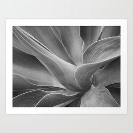 Mono Agave Attenuata Art Print