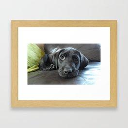 Labrador Puppy Framed Art Print