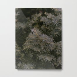 The winter touch Metal Print