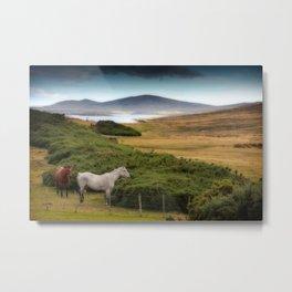 Two horses at San Carlos Metal Print
