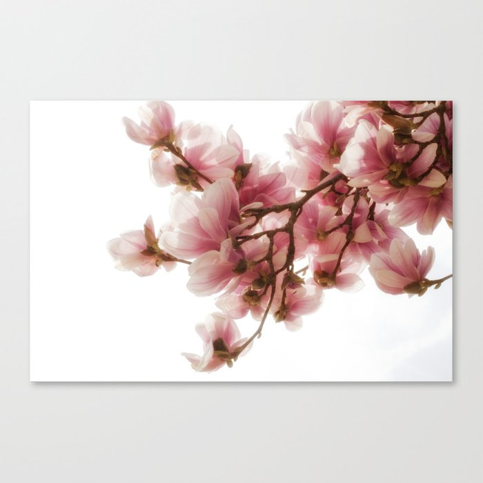 Magnolia Tree Pretty Pink Blooms Canvas Print By Janicemf Society6