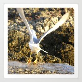 seagull flying Art Print