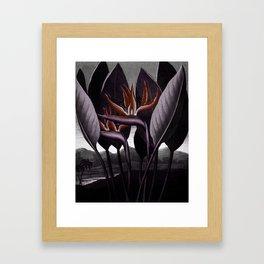 Birds of Paradise : Temple of Flora Dark Framed Art Print