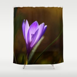 Bright Purple Spring Crocus Shower Curtain