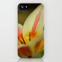Aprils garden Tulip iPhone Case