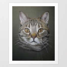 British shorthair cat Art Print