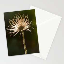 withered blossoms of pasque flowers 3 Stationery Cards