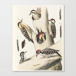 Naturalist Woodpeckers Canvas Print