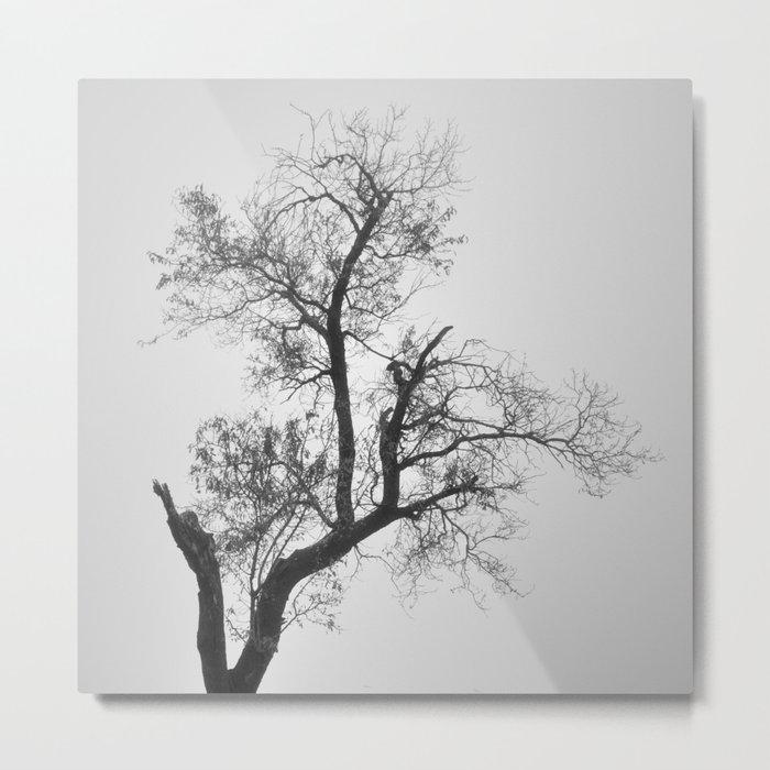 """""""Zen tree"""" Metal Print"""