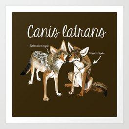 Coyotes in love Art Print