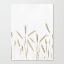 Lifestyle Background 33 Canvas Print
