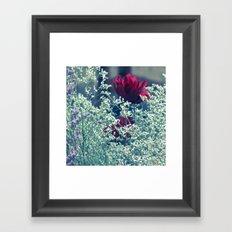 Garden rose Framed Art Print
