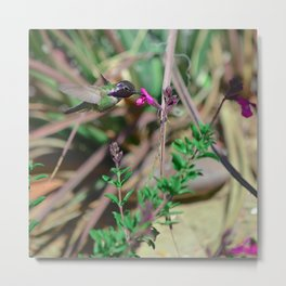 Beautiful Hummer Metal Print