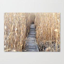 Through the reed Canvas Print