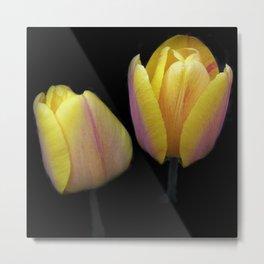 tulip elegance on black -2- Metal Print