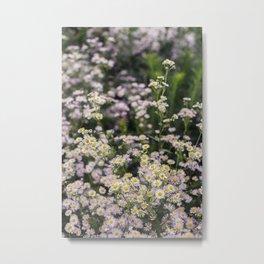 Japanese Daisies - Kawaguchiko Metal Print