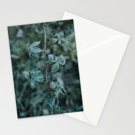 Frosted Blackberry Stationery Cards