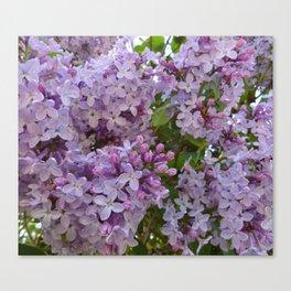 Lilac ~ Periwinkle Canvas Print