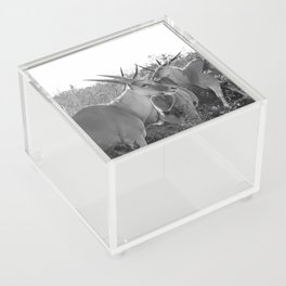 Herd of Eland stand in tall grass in African savanna Acrylic Box