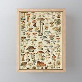 Adolphe Millot - Nouveau Larousse Illustré - Champignons (Mushrooms and Fungi) (1910) Framed Mini Art Print