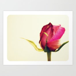 a rose is a rose... ~ flower Art Print