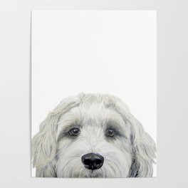 Labradoodle white by miart Poster