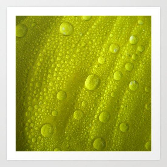 water drops petal IV Art Print