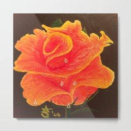 Orange Dream Rose in Acrylic Metal Print