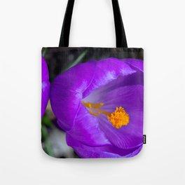 Deep purple and orange crocuses Tote Bag