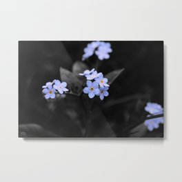 Forget Me - Not Metal Print